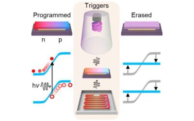 Programmable electronics based on the reversible doping of 2-D semiconductors