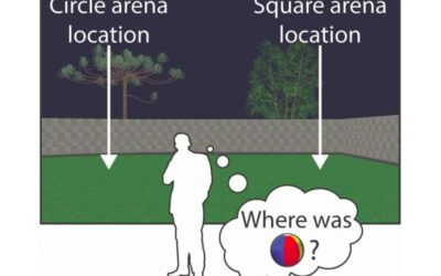 Remapping and realignment in the hippocampal formation predict context-dependent spatial behavior