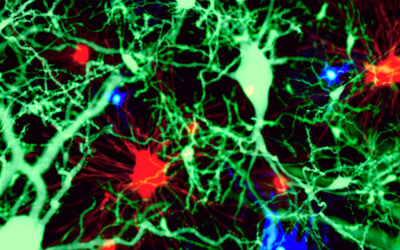 Unravelling microglial renewal and expansion during health and disease