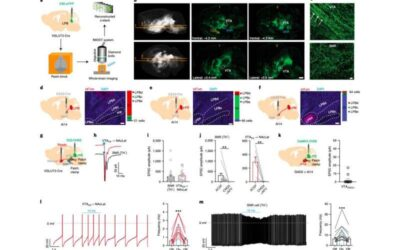 Identifying a neural circuit involved in how pain modulates dopamine neurons